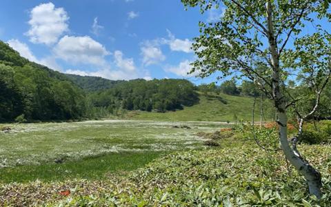 2020年6月21日、55才の誕生日に田ノ原湿原を歩く