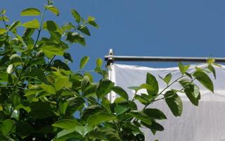 大きな柿の木の脇で外装リフォーム