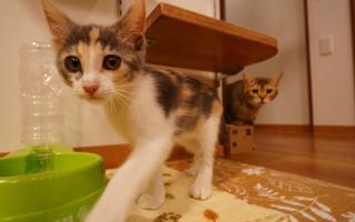 たくさんの猫ちゃんと楽しく暮らせる、バリアフリーマンション