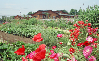 弓なりの曲線屋根が描く、三日月型の中庭がある保育園
