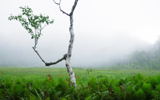 世界がぜんたい幸福に(1)木を見て森を見ず